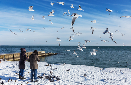 Odessa, Ukraine - January 19, 2016: Young girl feeds the hungry seagulls on the beach of the Black Sea winter. Hungry gulls circling over the people waiting for food.