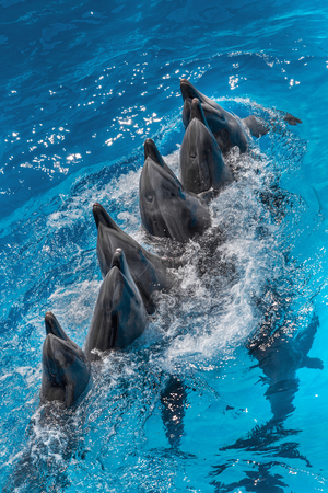 dolphins playing in the pool on a circus show