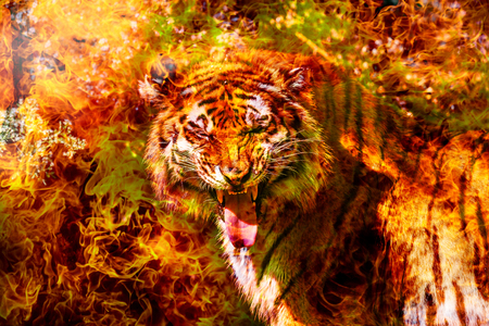 Fantastic portrait of a Bengal Siberian tiger on fire. Fire tiger of Chinese calendar. Postcard of the traditional Chinese New Year, Year of fiery red tiger. Background greeting card Happy New Year
