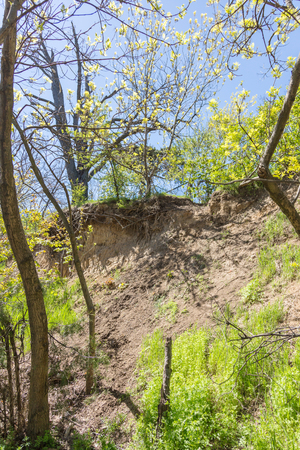 Unusual bizarre tree roots hang from a cliff of a landslide zone. Tree roots strengthen the steep slopes of the landslide zone and hang in the air after the collapse of the earthquake