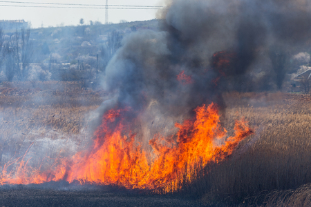 Raging forest spring fires. Burning dry grass, reed along lake. Grass is burning in meadow. Ecological catastrophy. Fire and smoke destroy all life. Firefighters extinguish Big fire. Lot of smoke 免版税图像 - 121543878