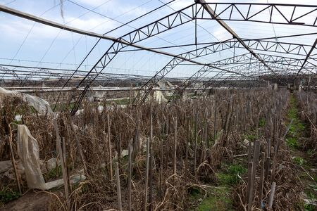 Greenhouse for growing vegetables. Abandoned nobody needed greenhouse of industrial capital. Destroyed agriculture, economic crisis Ukraine 2019. Large industrial greenhouse. Industrial agriculture
