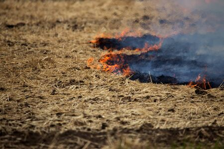 Dry forest and steppe fires completely destroy fields and steppes during severe drought. Disaster causes regular damage to the nature and economy of the region. Field Lights Farmer Burns Straw Stok Fotoğraf