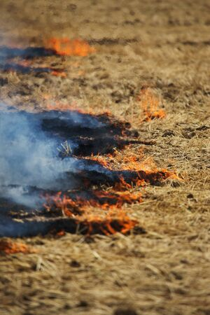 Dry forest and steppe fires completely destroy fields and steppes during severe drought. Disaster causes regular damage to the nature and economy of the region. Field Lights Farmer Burns Straw 스톡 콘텐츠