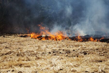Dry forest and steppe fires completely destroy fields and steppes during severe drought. Disaster causes regular damage to the nature and economy of the region. Field Lights Farmer Burns Straw Stock Photo