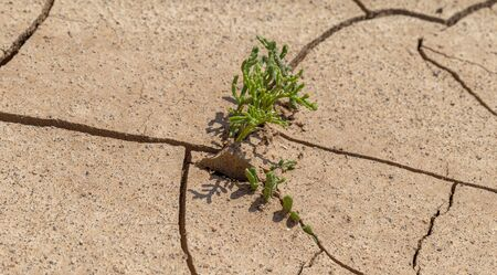 Cracked Earth. Concept: Cracks on surface of earth change as result of shrinkage of dirt due to arid conditions of terrain, global warming, ecology. Deadly drought. Tree growing on cracked ground Stock Photo