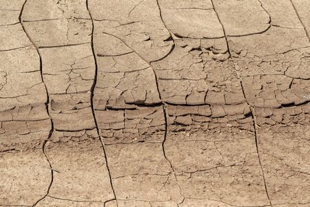 Cracked Earth. Concept: Cracks on surface of earth change as result of shrinkage of dirt due to arid conditions of terrain, global warming, ecology. Deadly drought. Tree growing on cracked ground