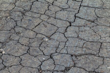 Cracked Earth. Concept: Cracks on surface of earth change as result of shrinkage of dirt due to arid conditions of terrain, global warming, ecology. Deadly drought. Tree growing on cracked ground 스톡 콘텐츠