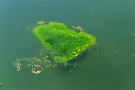 Large amount of debris and dirty waste water caused rapid growth of algae in lake. Water pollution. Ecological problem. Green algae on surface of water. Flowering water as background or texture