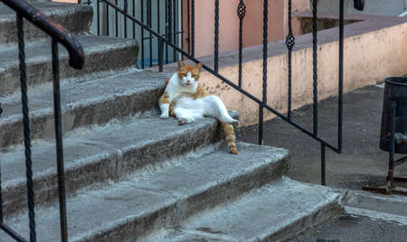 An impudent fat ginger cat sits on the steps of the house and boldly looks at visitors. Fat ginger cat sits lounging on the stone steps of the stairs