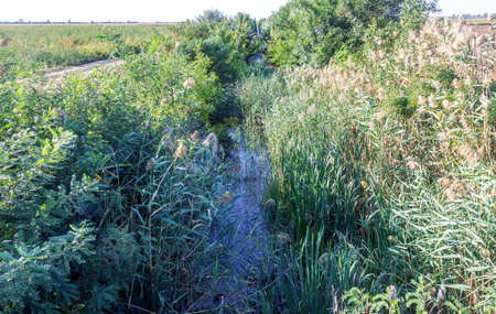 Old overgrown earthen irrigation canal with remains of rotten, stinking, tainted water. As result of water blockade of Crimea, artificial drought, unused water of earthen canal rots and disappears Stock fotó