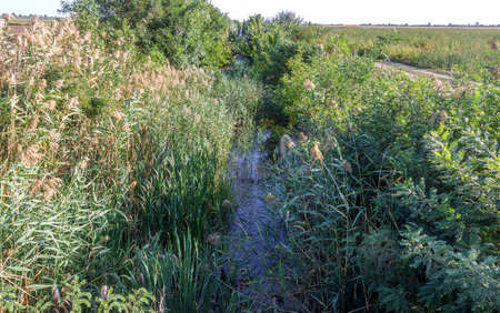 Old overgrown earthen irrigation canal with remains of rotten, stinking, tainted water. As result of water blockade of Crimea, artificial drought, unused water of earthen canal rots and disappears 免版税图像