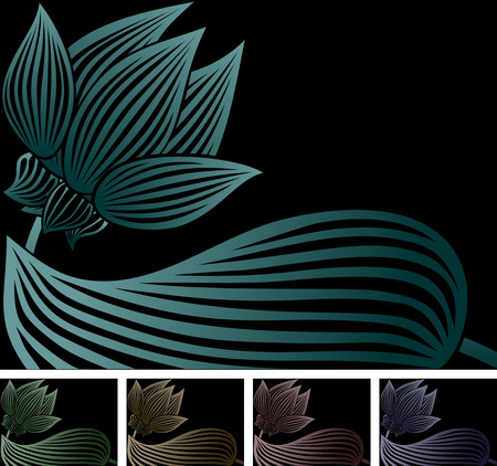 gradation color lotus on black