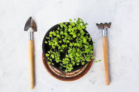 Seedlings in a brown pot