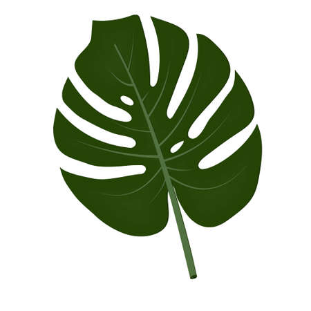 leaf of an exotic monstera plant, isolated, on a white background, color vector illustration, design, decoration Ilustrace