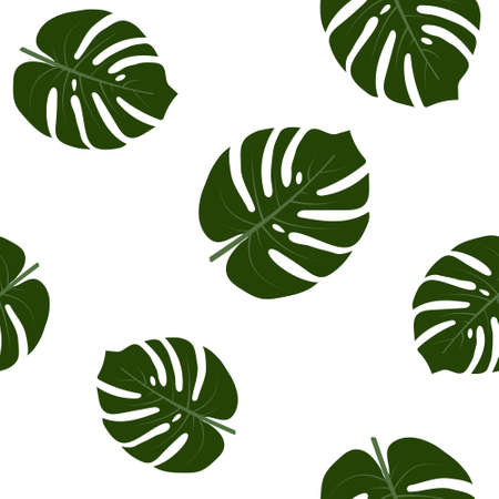 pattern with monstera leaves on a white background, color vector illustration, design, decoration