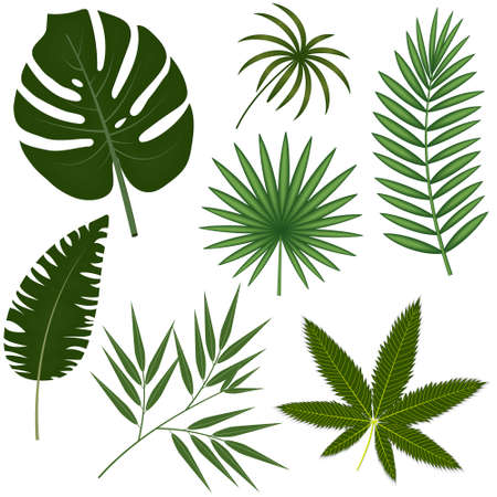 set of exotic leaves close-up on a white background, color vector illustration, design, decoration, banner, poster
