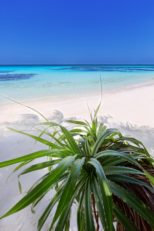 honey moon: Beautiful tropical day on the island beach at Maldives