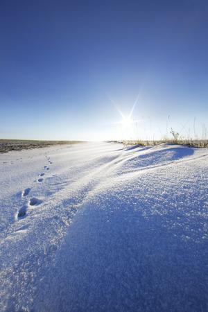 snowdrift: Snowdrift and should animal against the sun