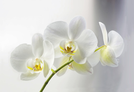 orchidee: Orchidee Archivio Fotografico