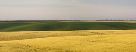 agri: Morning in the farmland
