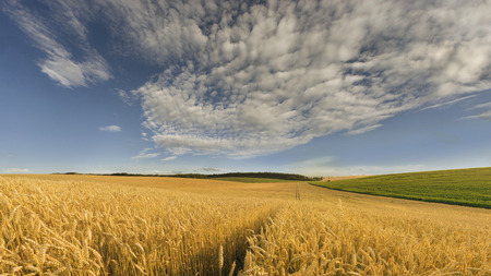 agrarian: Agrarian field in the summer day.