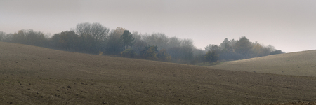 outgrowth: Agricultural field on a misty day in autumn