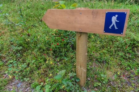 wooden trail sign: Small wooden trail sign in a forest area for hiking and walking