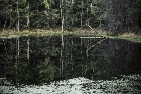 murky: Murky forest and reflection small lake