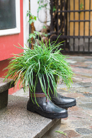 Grass in rubber boots creative used as flower pot