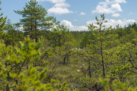 bog: View through bog area thicket Stock Photo