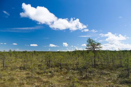bog: Viru bog reserve area under blue sky Stock Photo