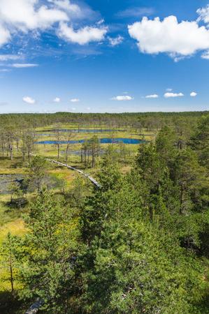 bogs: Viru bogs area on summer aerial vertical view