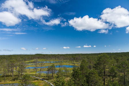 bogs: Viru bogs area on summer, top view Stock Photo