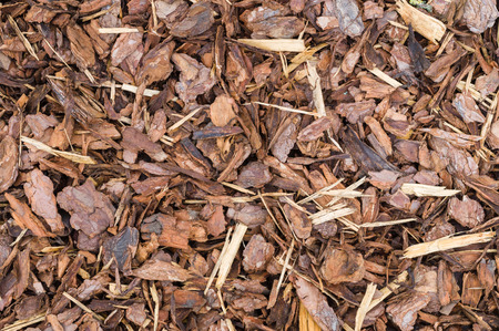bark mulch: Natural bark used as a soil covering for mulch in the garden, wood chip background texture