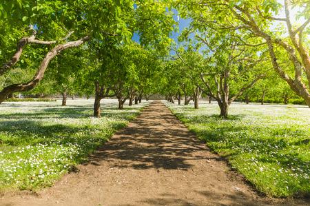 Summer fruit garden walkway under sunlight and blue sky Stok Fotoğraf - 43423925