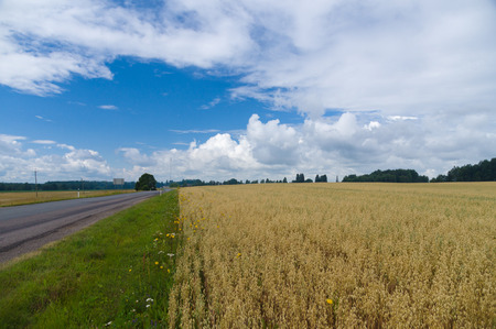 oat field: Summer agriculture landscape with oat field and empty asphalt road on the background of cloudscape Stock Photo
