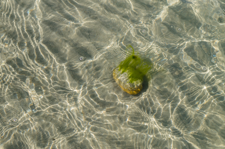 ooze: Stone with alga at the sandy bottom of sea, view through transparent water