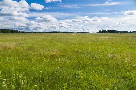 uncultivated: Uncultivated  countryside field, summertime rural landscape Stock Photo