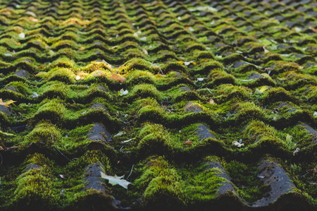 roofed house: Old tiled roof covered by moss