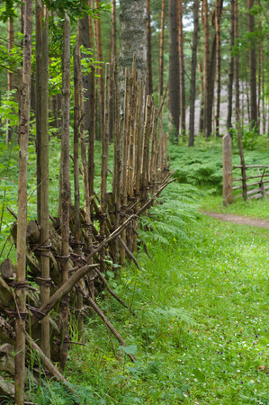 paling: Wooden paling fence in scenic forest