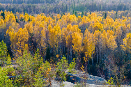 treeline: Colorful autumn forest from above view Stock Photo