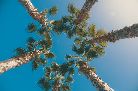tree shape': Five palm trees against blue sky with sunflare, view from below, toned image