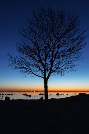 reveille: Tree silhouette by night on the sea coast Stock Photo