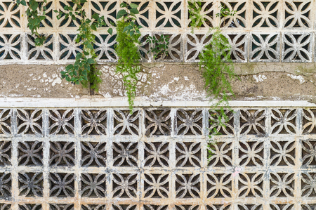 Decorative Concrete Blocks Wall With Different Creeping Plants ...