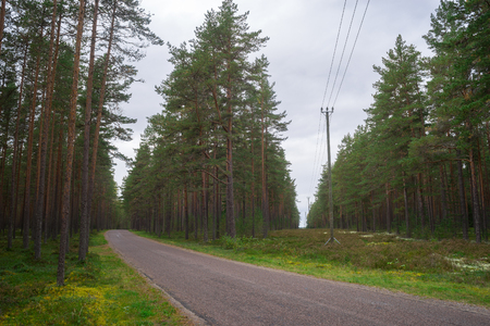 cut through: Turning road and power lines cut through wooded area