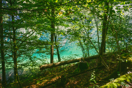 thicket: Colorful water of Obersee lake through thicket on sunny day, Germany