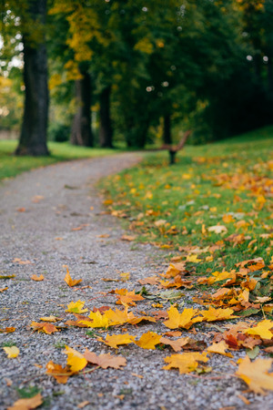 Turning pathway in autumnal park, fallen leaves on foreground