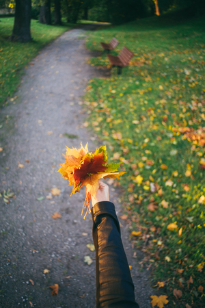 wide angle lens: Female hand holding bunch of falling leaves against pathway in autumnal park. Selective focus, wide angle lens Stock Photo