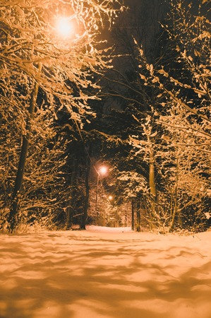 vertical composition: Illuminated pathway through snowbound forest by night, vertical composition Stock Photo